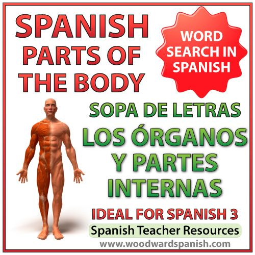 Word Search - Internal parts of the body in Spanish. Sopa de letras - Partes del cuerpo - Los órganos y partes internas