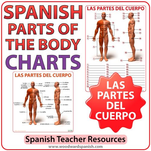 Spanish Parts of the Body Chart - Las Partes del Cuerpo en Español
